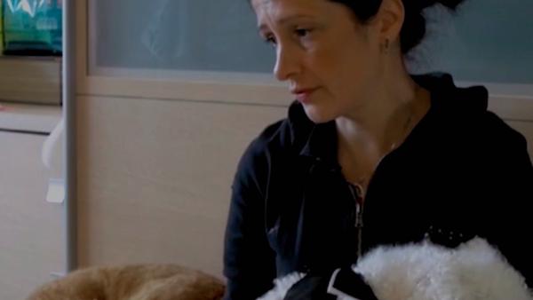 Pies pomaga kotom - Sputnik Polska