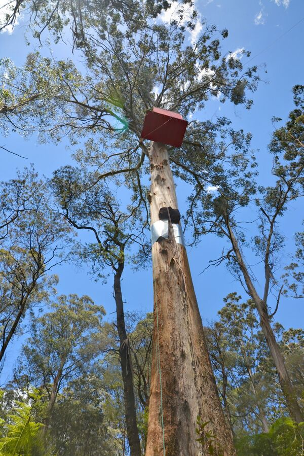 Domek na drzewie w Australii - Sputnik Polska