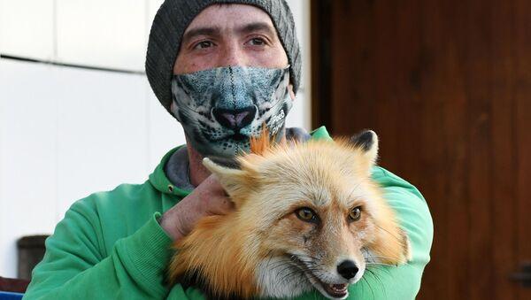 Mężczyzna w masce trzyma lisa - Sputnik Polska