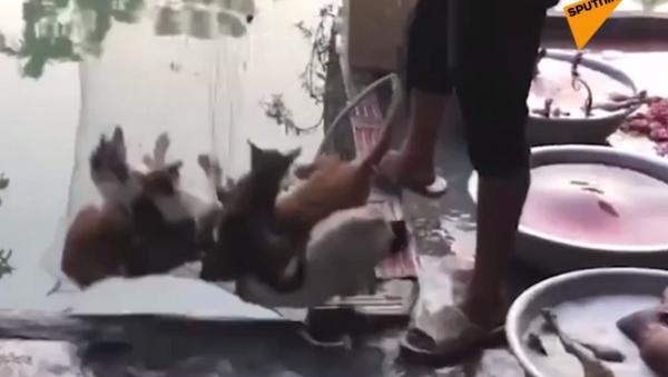 Po co zabijają koty? - Sputnik Polska