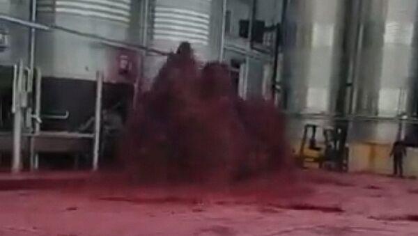 Tysiące litrów wina wylało się w jednym z zakładów winiarskich w hiszpańskiej prowincji Albacete. - Sputnik Polska