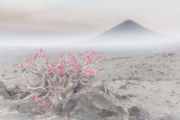 """Fotografia """"Blooming desert"""" włoskiego fotografa Marco Gaiottiego, zwycięzcy w kategorii Rośliny i grzyby w konkursie European Wildlife Photographer of the Year 2020 - Sputnik Polska"""