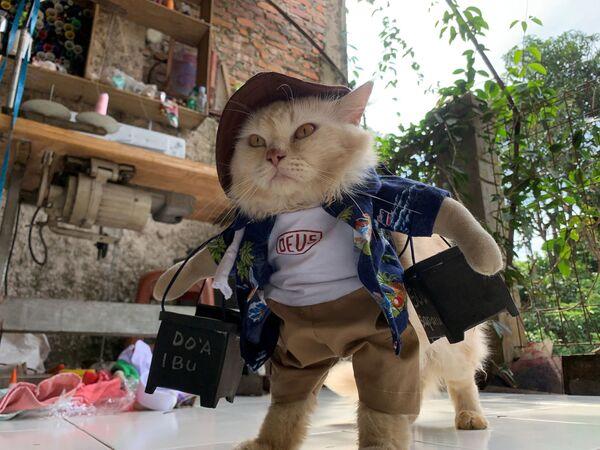 Kot w kostiumie cosplay  - Sputnik Polska