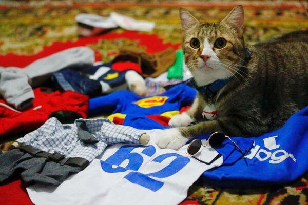 Kot wśród kostiumów cosplay w Dżakarcie w Indonezji  - Sputnik Polska