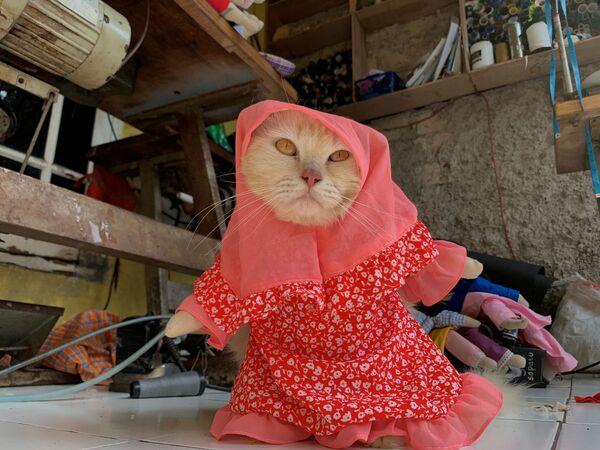 Kot nosi kostium hidżabu w Dżakarcie  - Sputnik Polska