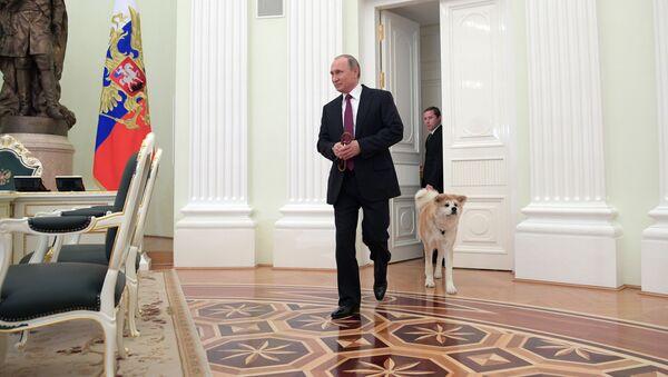 Prezydent Rosji Władimir Putin z psem Akita Inu w Kremlu  - Sputnik Polska