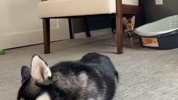 Kot i pies - Sputnik Polska