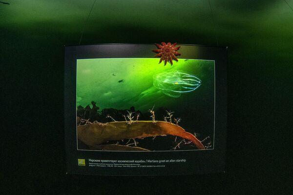 Pierwsza galeria sztuki pod lodem w Morzu Białym za kołem podbiegunowym - Sputnik Polska