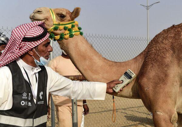 Wyścigi wielbłądów w Arabii Saudyjskiej, 11 sierpnia 2021 roku. - Sputnik Polska