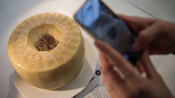 Сыр касу марцу в музее Disgusting Food во Франции  - Sputnik Polska