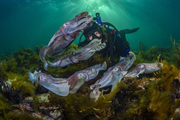 Nurek obserwuje krycie mątwy. Port Bonython, Australia Południowa. Fotograf Scott Portelli - Sputnik Polska