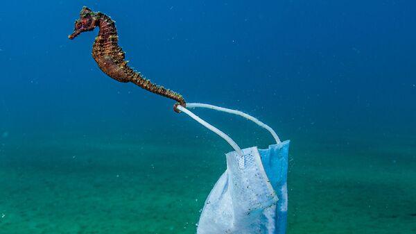 Снимок фотографа Nicholas Samaras, высоко оцененный в категории Conservation Photographer of the Year конкурса Ocean Photographer of the Year 2021 - Sputnik Polska