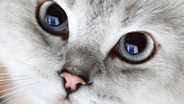 Biały kot - Sputnik Polska