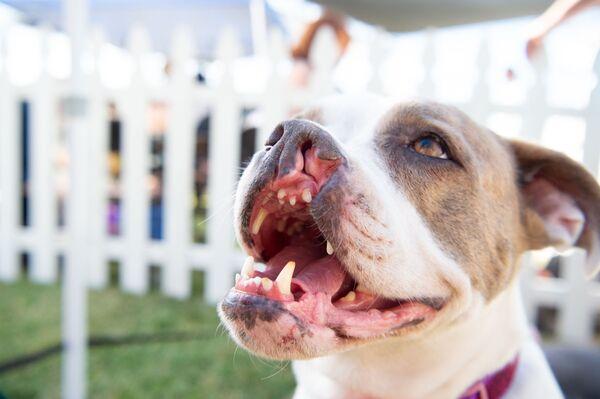 Pies z rozszczepem podniebienia o imieniu Puka - Sputnik Polska