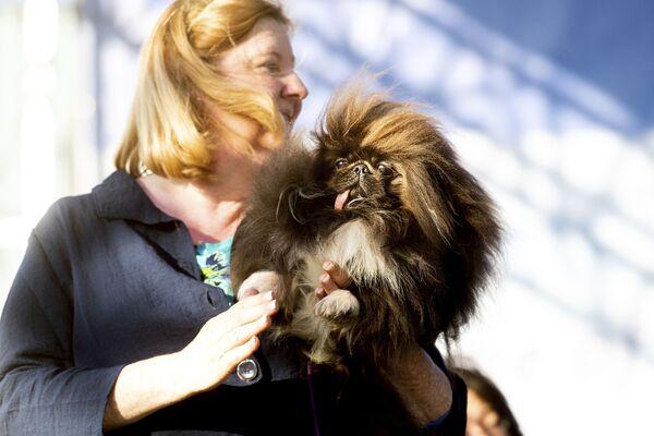 Pekińczyk o imieniu Wild Thang uczestniczy w konkursie Najbrzydszy pies świata 2019 - Sputnik Polska