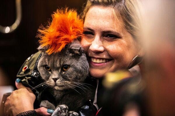 Kot Thunder Folds podczas pokazu mody Algonquin Hotel's Annual Cat Fashion Show w Nowym Jorku - Sputnik Polska