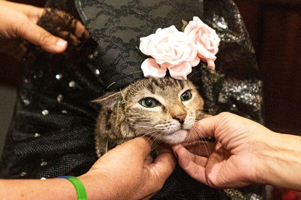 Za kulisami kociego pokazu mody w Nowym Jorku  - Sputnik Polska