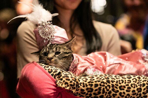 Kotka Sakie podczas pokazu mody Algonquin Hotel's Annual Cat Fashion Show w Nowym Jorku  - Sputnik Polska