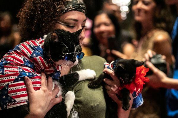 Kot Balboo i Figaro podczas pokazu mody Algonquin Hotel's Annual Cat Fashion Show w Nowym Jorku  - Sputnik Polska