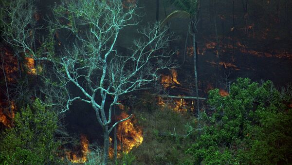 Pożary w Amazonii, zdjęcie archiwalne z 1998 roku - Sputnik Polska