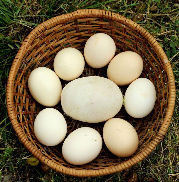 Gigantyczne jajo z Gruzji o wadze 170 gramów - Sputnik Polska