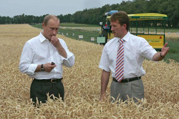 Władimir Putin w polu zbóża - Sputnik Polska