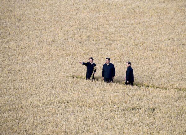 Prezydent Chin Xi Jinping w polu - Sputnik Polska