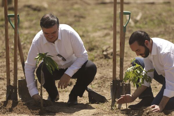 Prezydent i minister spraw zagranicznych Salwadoru sadzą rośliny - Sputnik Polska