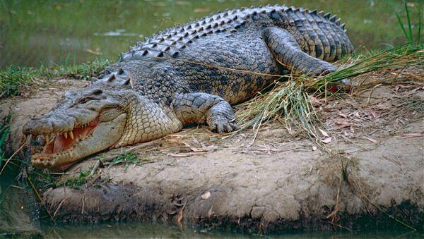 Krokodyl - Sputnik Polska