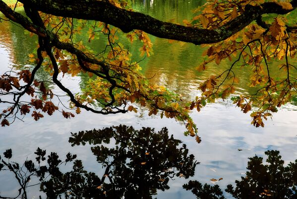 Jesień w parku pałacowym Oranienbaum - Sputnik Polska