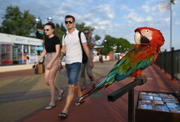 Papuga na promenadzie w Soczi - Sputnik Polska