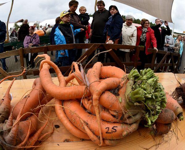 Gigantyczne marchewki na konkursie warzywnym w Niemczech. 2015 rok - Sputnik Polska