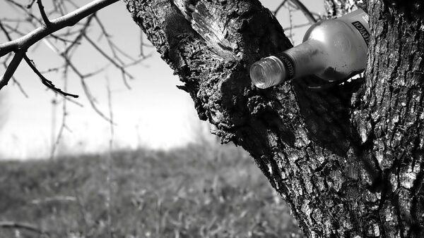 Butelka wódki na drzewie - Sputnik Polska