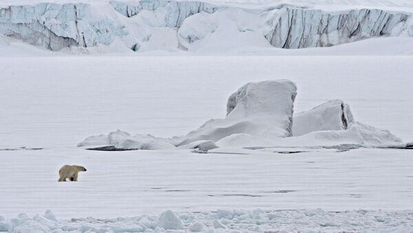 Biały niedźwiedź na krze na Oceanie Arktycznym - Sputnik Polska