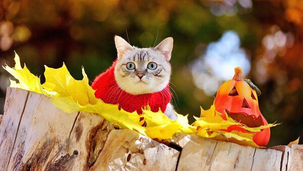 Kot w swetrze   - Sputnik Polska