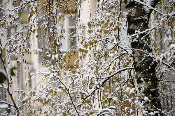 Zaśnieżone drzewa w Moskwie - Sputnik Polska
