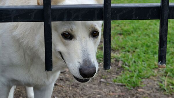 Pies - Sputnik Polska