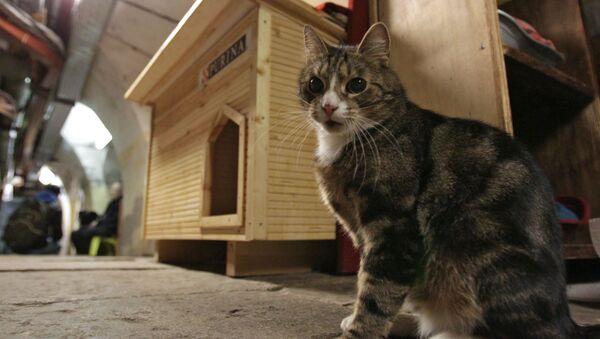 Kot w Ermitażu - Sputnik Polska