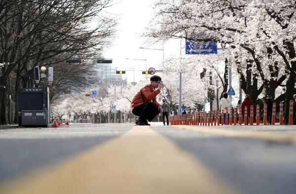 Kwitnienie sakury w Seulu - Sputnik Polska