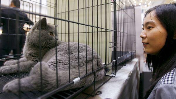 Wystawa kotów w Wuhan, Chiny. - Sputnik Polska