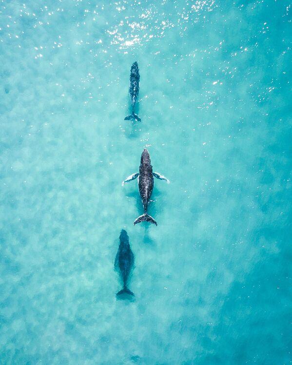 """Spotting these 3 cruising up the coast made my day"", Australia - Sputnik Polska"