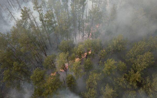Pożar w Czarnobylskiej Strefie Wykluczenia - Sputnik Polska