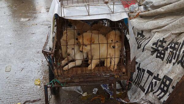Psy na targu w chińskim Yulin - Sputnik Polska