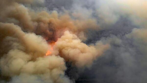 Pożar lasu w strefie czarnobylskiej - Sputnik Polska