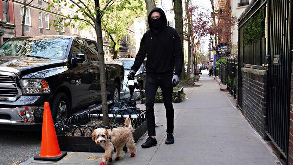 Mężczyznna w masce wyprowadza psa, Nowy Jork - Sputnik Polska