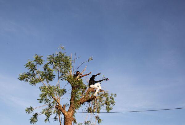 Demonstranci na drzewie w Sudanie - Sputnik Polska