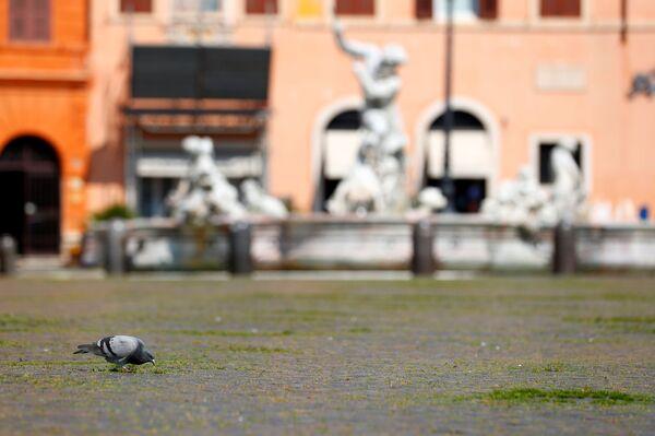 Plac Piazza Navona w Rzymie - Sputnik Polska
