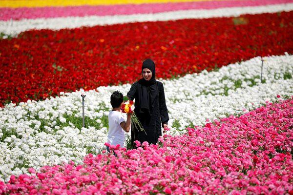 Kwitnące pola w Izraelu - Sputnik Polska