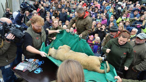 Dzieci na sekcji zwłok lwa w ZOO w Odense - Sputnik Polska