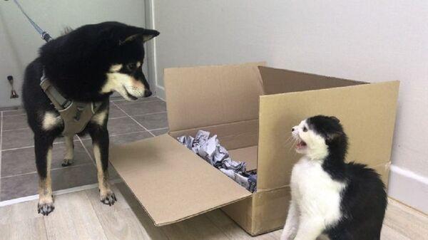 Pies i kot - Sputnik Polska